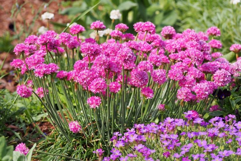 Pflanzen Gegen Unkraut