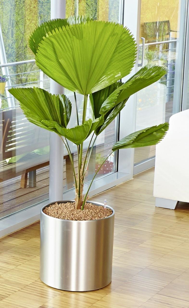 Die Schonsten Zimmerpflanzen Mit Xxl Blattern