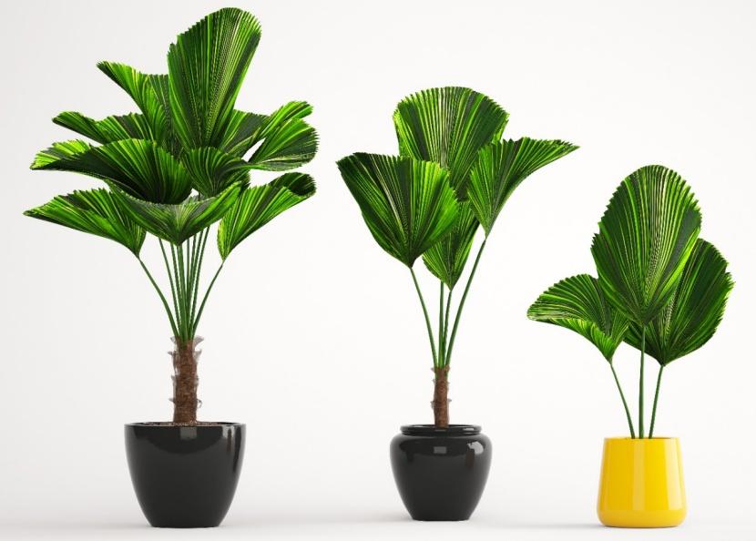 Die schönsten Zimmerpflanzen mit XXL-Blättern