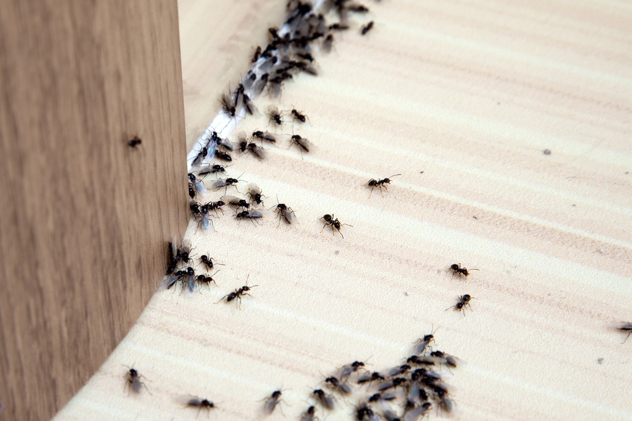 Was Tun Gegen Ameisen Im Haus : was tun gegen ameisen im haus ~ Watch28wear.com Haus und Dekorationen